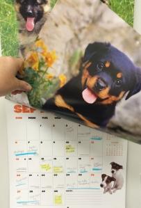Flipping the calendar